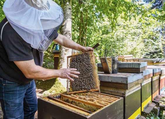 apiculteur-neuchatel-miel
