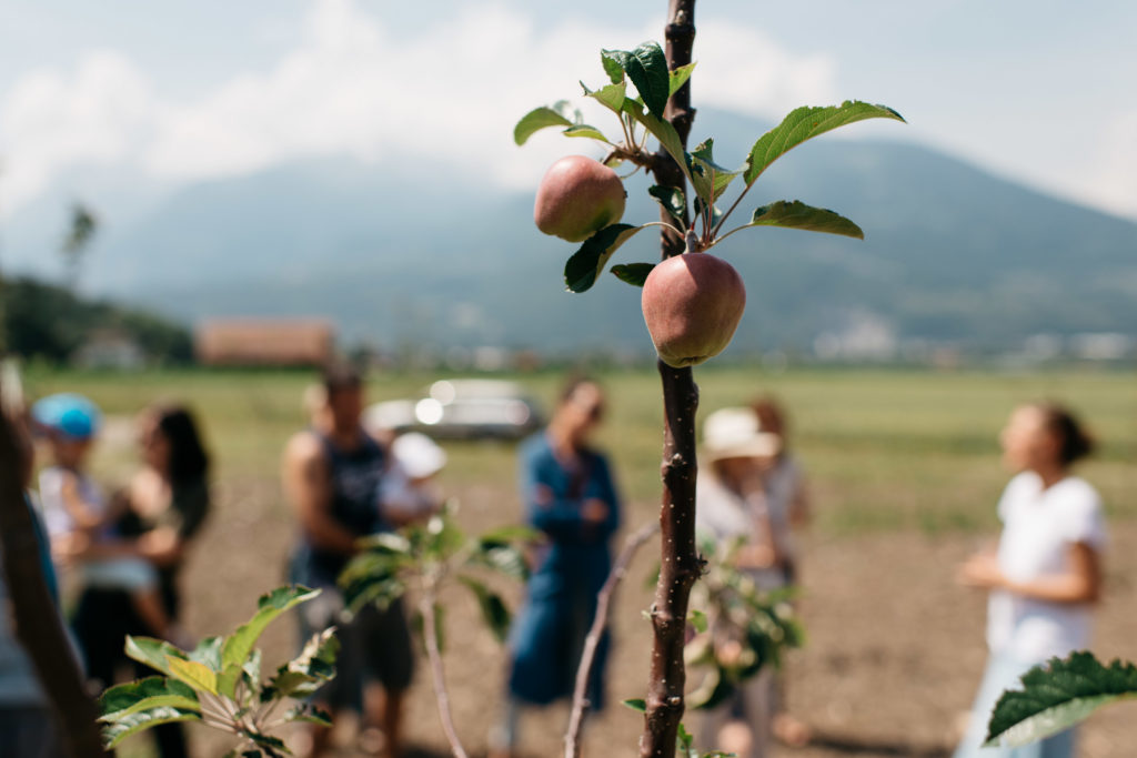 fondation-opaline-fruits
